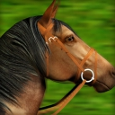 Gallop for Gold Slots - logo