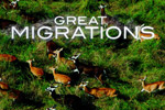 Help migrating animals to their new homes in Nat. Geo's Great Migrations!