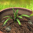 Plant Panic - logo