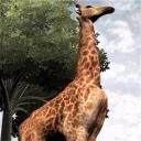Zoo Vet - logo