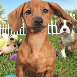 Petz Dogz 2 - Pick out a new puppy to play and explore with in Petz® Dogz® 2! - logo