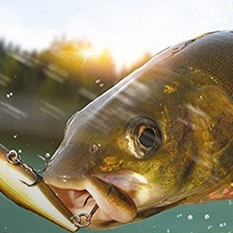 3D Arcade Fishing - Arcade Fishing invites you to discover 15 different, visually stunning fishing locations all around the world. - logo